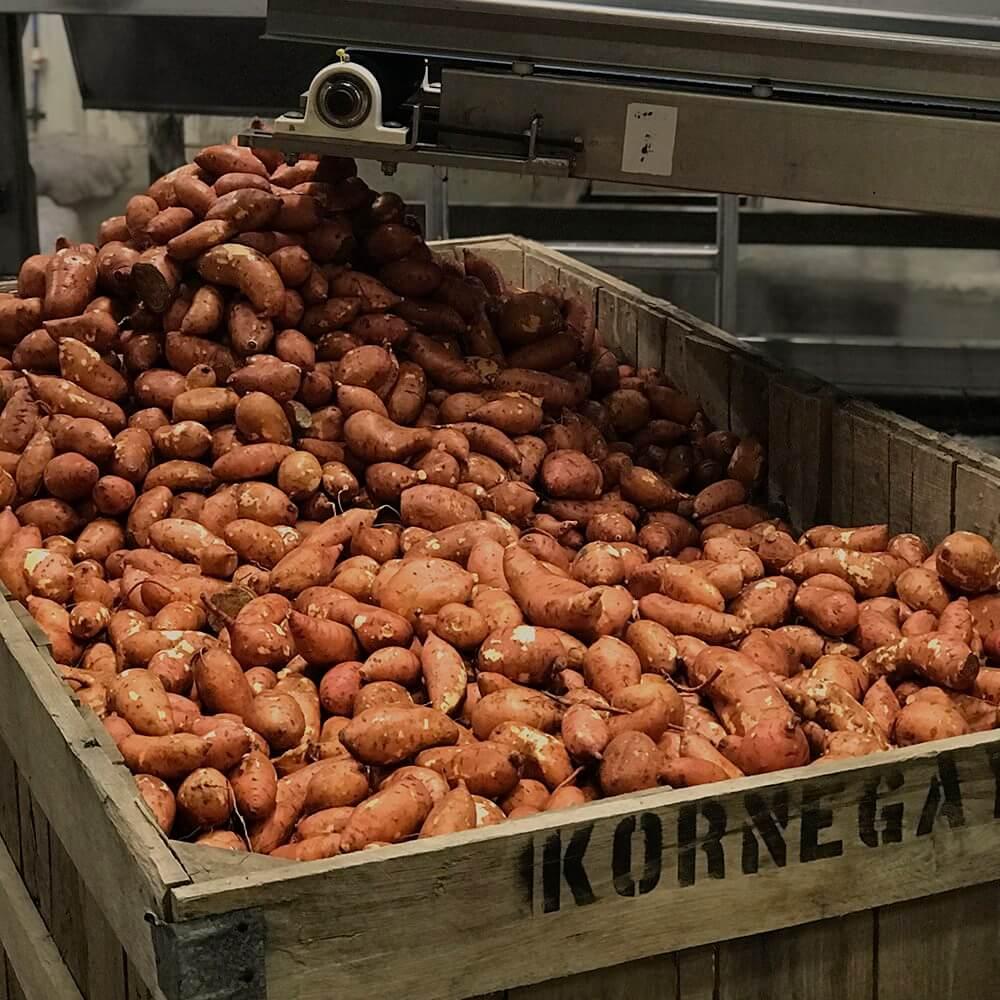 Industry | North Carolina SweetPotatoes