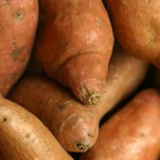 FRESH PLAZA REPORTS: GOOD WEATHER MAKES FOR CLEAN SWEETPOTATO CROP