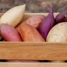 Farm to Table: A Year in the Life of A NC Sweetpotato
