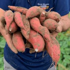 Seven Sweet Ways to Celebrate National Sweetpotato Month